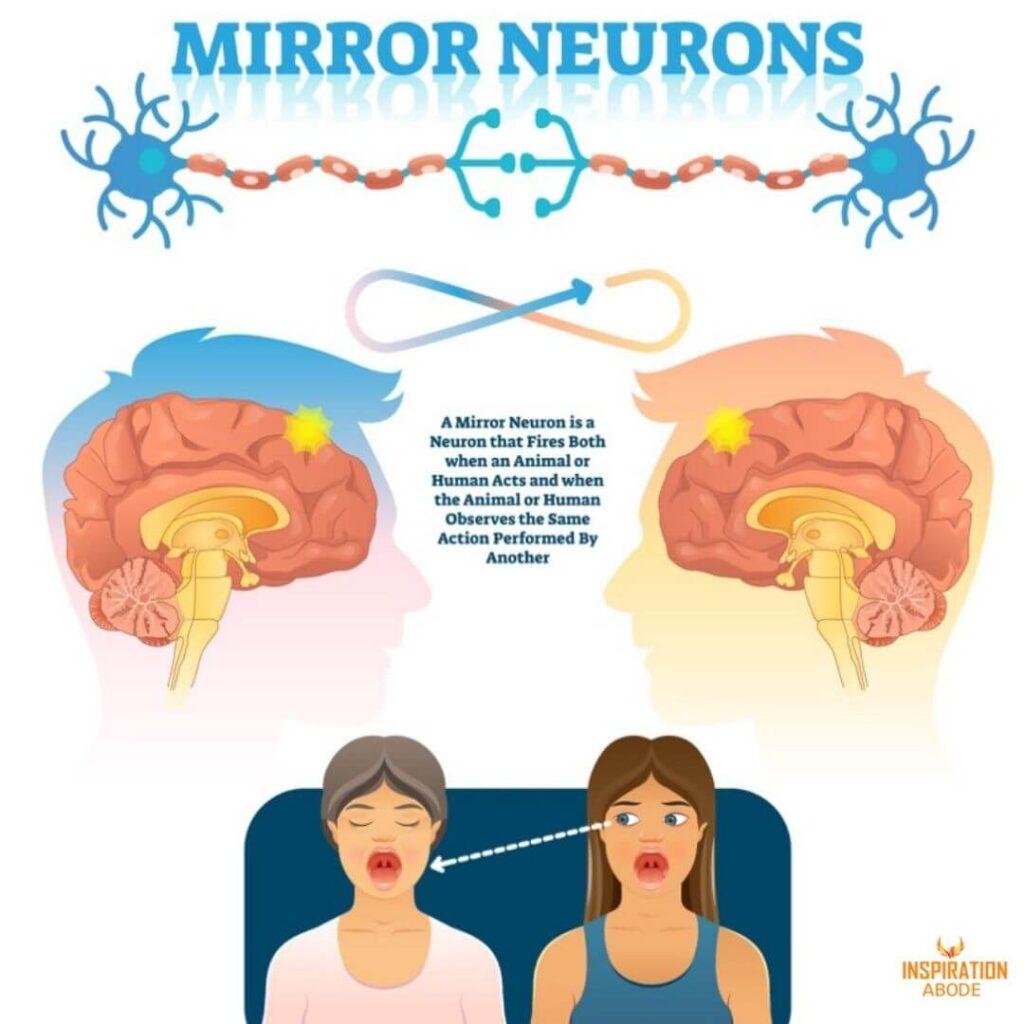 mirror neuron system